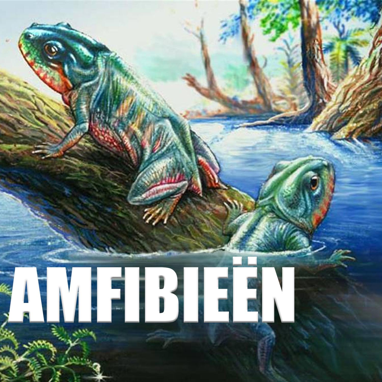 amfibie
